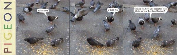 pigeon22